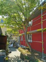Der Efeu musste weichen, aber jetzt kann sich die Fassade in ihrer ganzen roten Schönheit zeigen